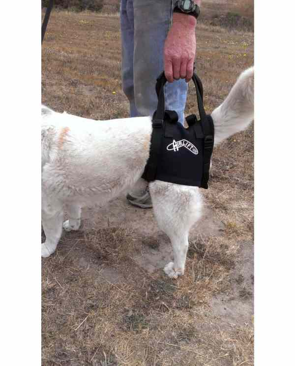 Walkabout Airlift Harness K9 Carts - Pet