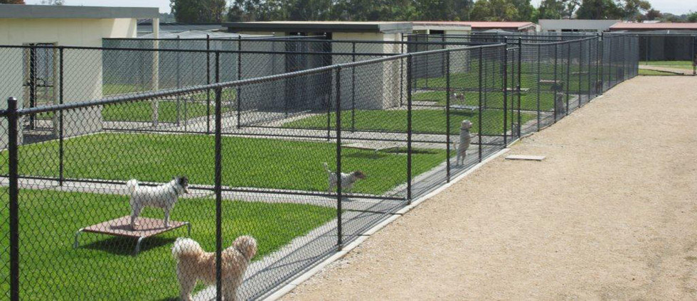 Are you Searching Dog Boarding Kennels in Newcastle  DOG