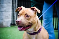 Delilah is seeking a foster heart & heart. Please consider this loving girl!