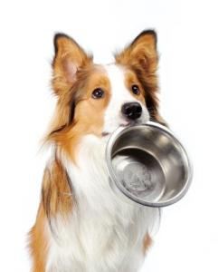 dog holding bowl