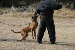 Policedogs training