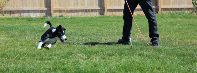 Initial Evaluation for your dog-Tucson Dog Training