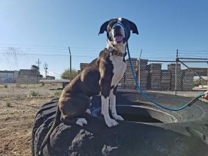 dog-training-south-tucson