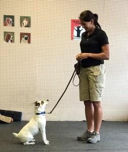 Dog Training For Dallas Fort Worth DFW Texas!