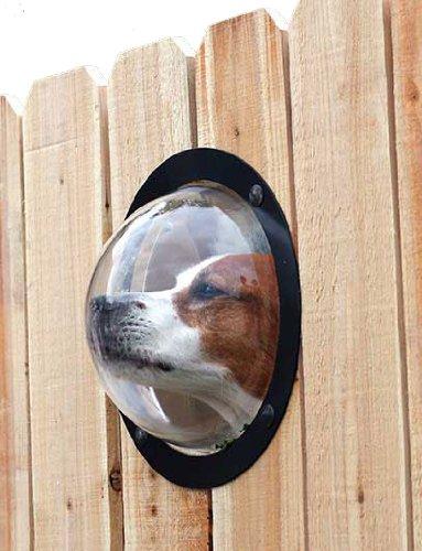 dog window