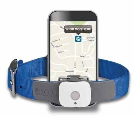 tagg dog GPS