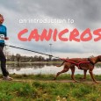 what is canicross