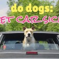 do dogs get car sick?