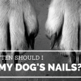 how often should I cut my dog's nails