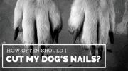 cut dog's