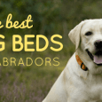the best dog beds for labradors