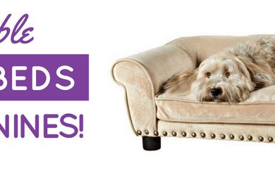 best dog sofa beds
