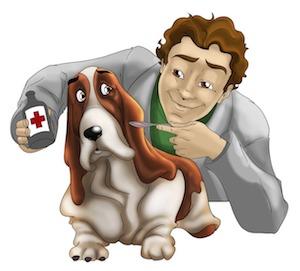 can dogs take ibuprofen