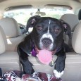 dog carriers for car