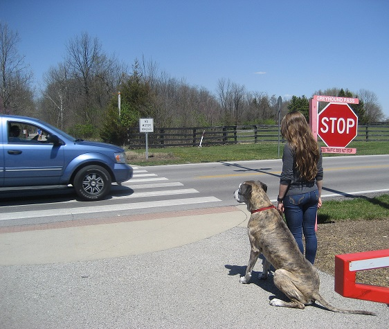 The skills learned in Basic Dog Manners have many practical applications