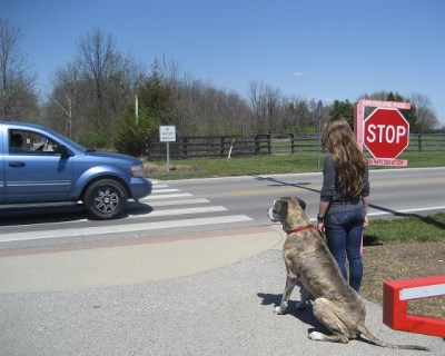 Maximus demonstrating the sit command learned in Obedience Essentials