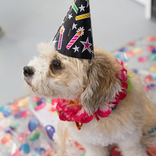 K9to5 Littles - Dog birth parties perth