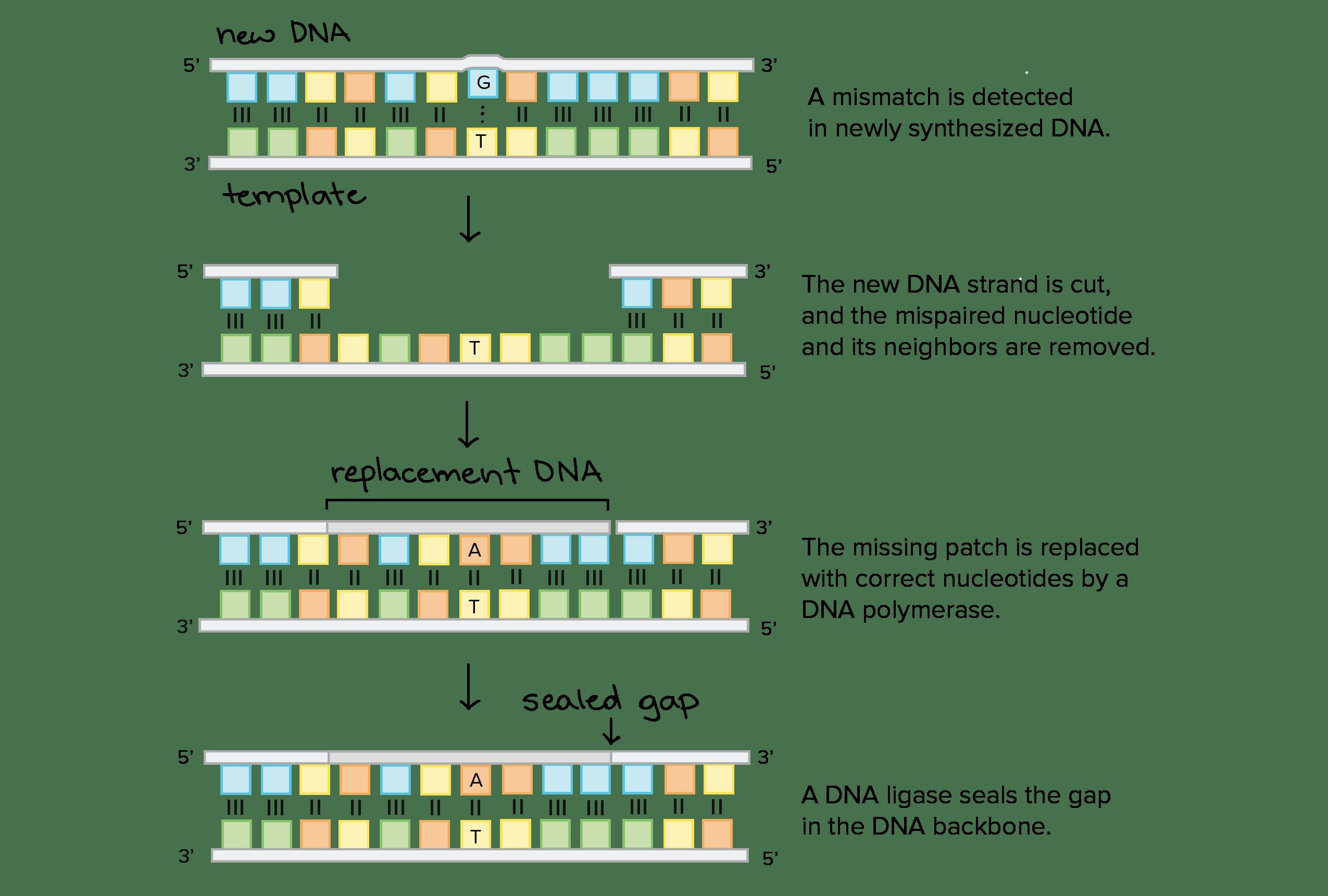 Molecular Genetics Definition