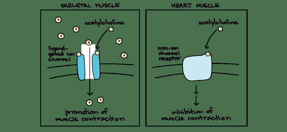 medium resolution of sequential turn signal wiring diagram