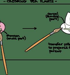 blank flower diagram to label [ 2078 x 1119 Pixel ]