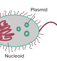 conjugation transformation transduction bacteria article khan academy [ 2550 x 1175 Pixel ]