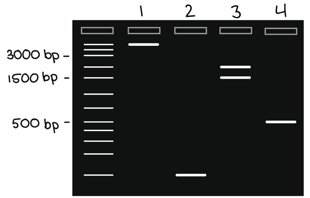 Diagram 4 Diagram 5 Diagram 6 Diagram 4 Academy Elftone