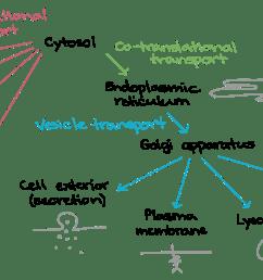 dna replication diagram labeled [ 2087 x 937 Pixel ]