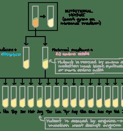 tatum super ace wiring diagram pdf [ 1738 x 1275 Pixel ]