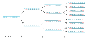 List of Synonyms and Antonyms of the Word: pcr diagram