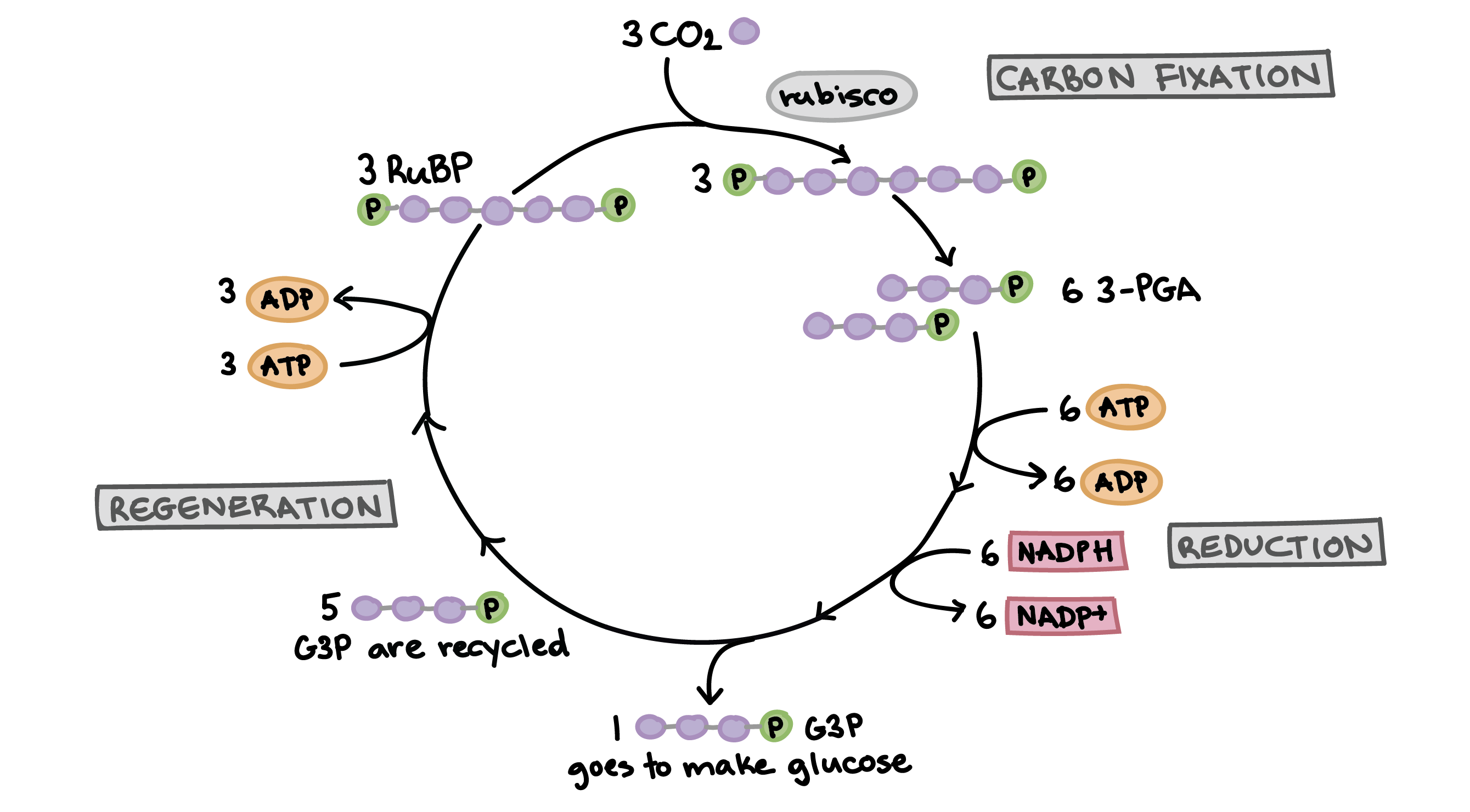 adp molecule diagram labeled wiring for motorcycle alarm energy life
