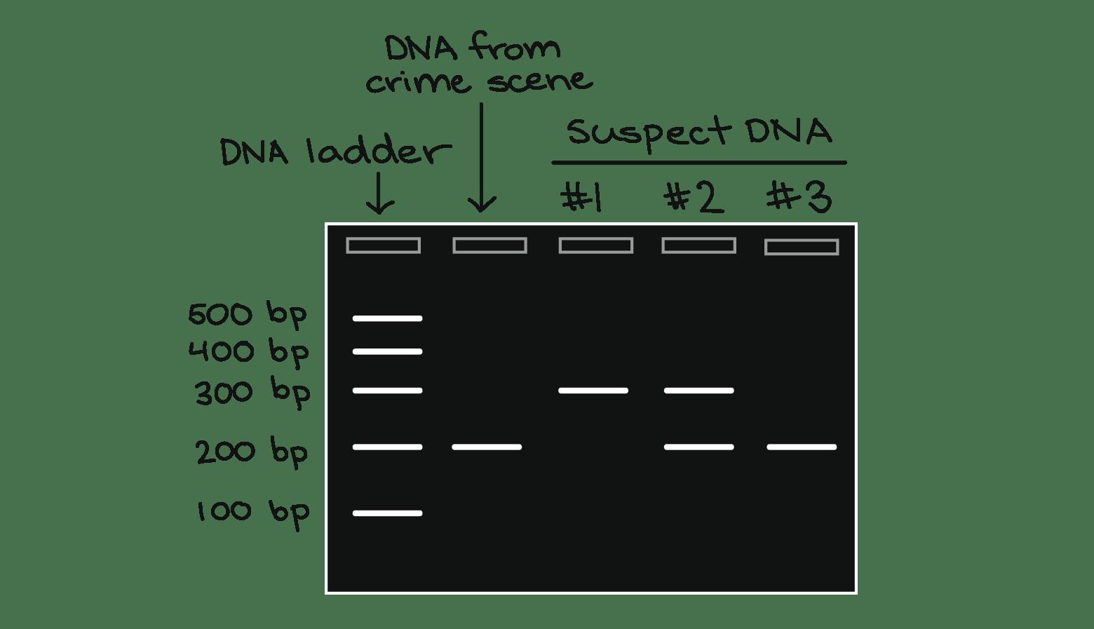 Forensic Science Lab Worksheet