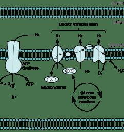phospholipid bilayer cytosol cell diagram [ 2238 x 1758 Pixel ]