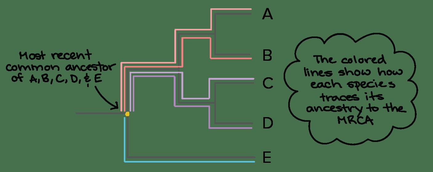 branches branching tree diagram 1980 honda cb750f wiring high school biology phylogenetic worksheet. high. best free printable worksheets