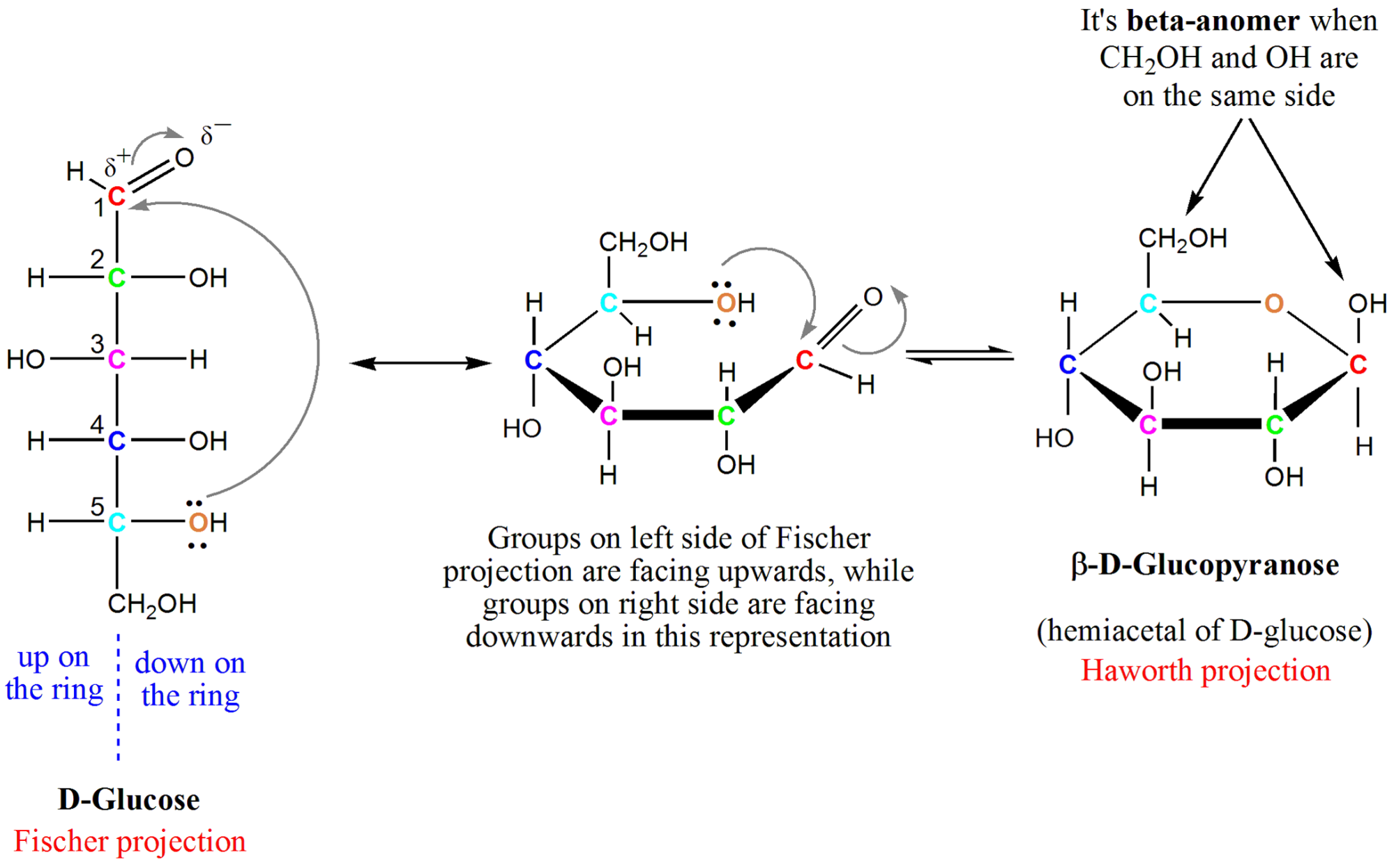hight resolution of diagram showing how to form a hemiacetyl of glucose from its original open form seen
