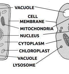 part of the cell diagram quiz [ 1266 x 640 Pixel ]