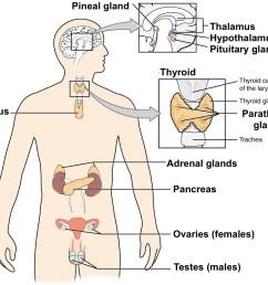 nervou system diagram full neorn [ 975 x 831 Pixel ]