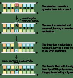 label dna diagram [ 2550 x 1537 Pixel ]