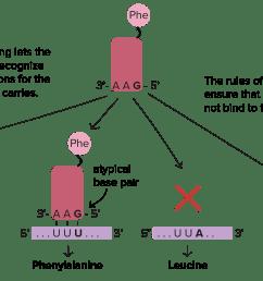 dna replication diagram labeled [ 3193 x 1867 Pixel ]