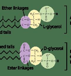 conjugation transformation transduction bacteria article khan academy [ 2116 x 1112 Pixel ]