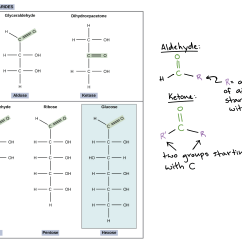 Carbohydrate Structure Diagram Ford 8n 12 Volt Conversion Wiring Worksheet Organic Macromolecules Grass Fedjp