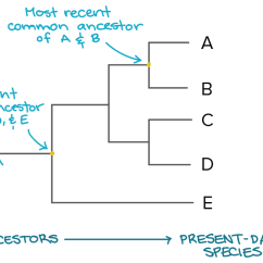 Tree Diagram Problems And Answers Door Bell Wiring Worksheet Cladogram Grass Fedjp