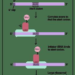 Translation Vs Transcription Venn Diagram Air Conditioning Wiring Manual 2017 04 24 Biology Gentetic Poster Assignment 1