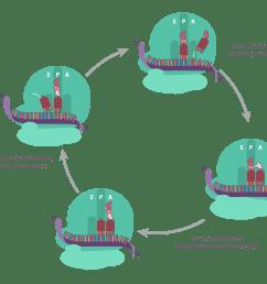 dna replication diagram labeled [ 2900 x 2550 Pixel ]