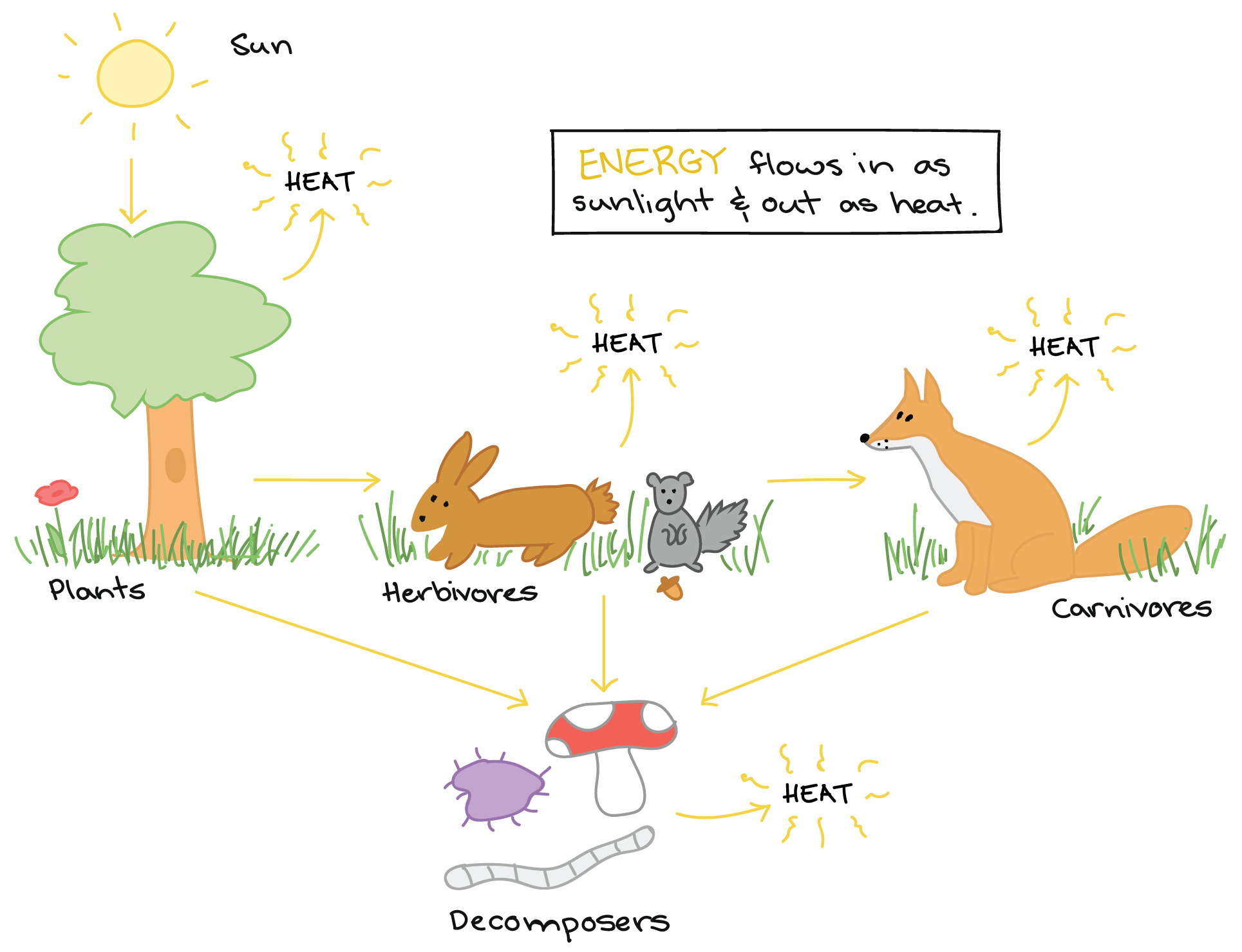 Ecosystem Definition For Kids