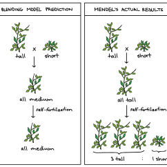 Cross Pollination Diagram For Kids Gm G Body Wiring Pea Plant Worksheet Product Diagrams
