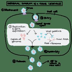 Virus Diagram Worksheet Emg Pj Wiring Nsfw Biology  Pseudoscience Is Dangerous