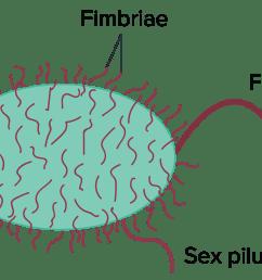 conjugation transformation transduction bacteria article khan academy [ 2550 x 1156 Pixel ]