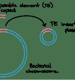 conjugation transformation transduction bacteria article khan academy [ 1658 x 1031 Pixel ]