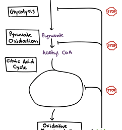 choosing examples from your knowledge of molecular biology [ 1396 x 1788 Pixel ]