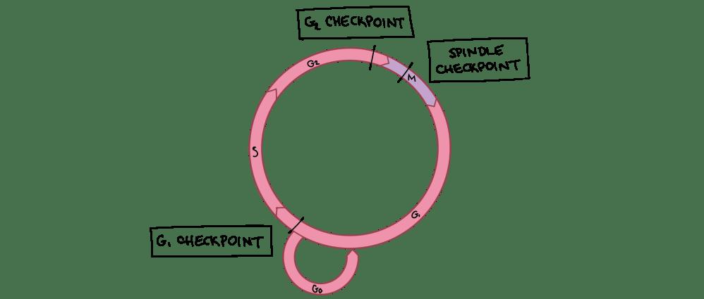 medium resolution of diagram of check cell